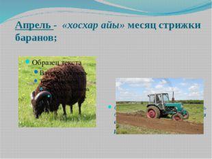 Апрель - «хосхар айы» месяц стрижки баранов; Сагайцы, шорцы и некоторая часть