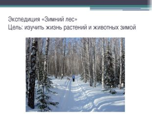 Экспедиция «Зимний лес» Цель: изучить жизнь растений и животных зимой