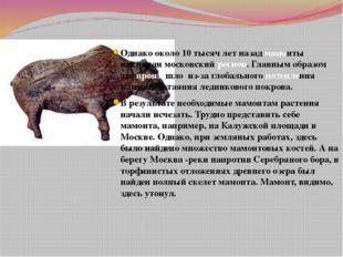 Однако около 10 тысяч лет назад мамонты покинули московский регион. Главным о