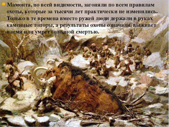 Мамонта, по всей видимости, загоняли по всем правилам охоты, которые за тысяч...