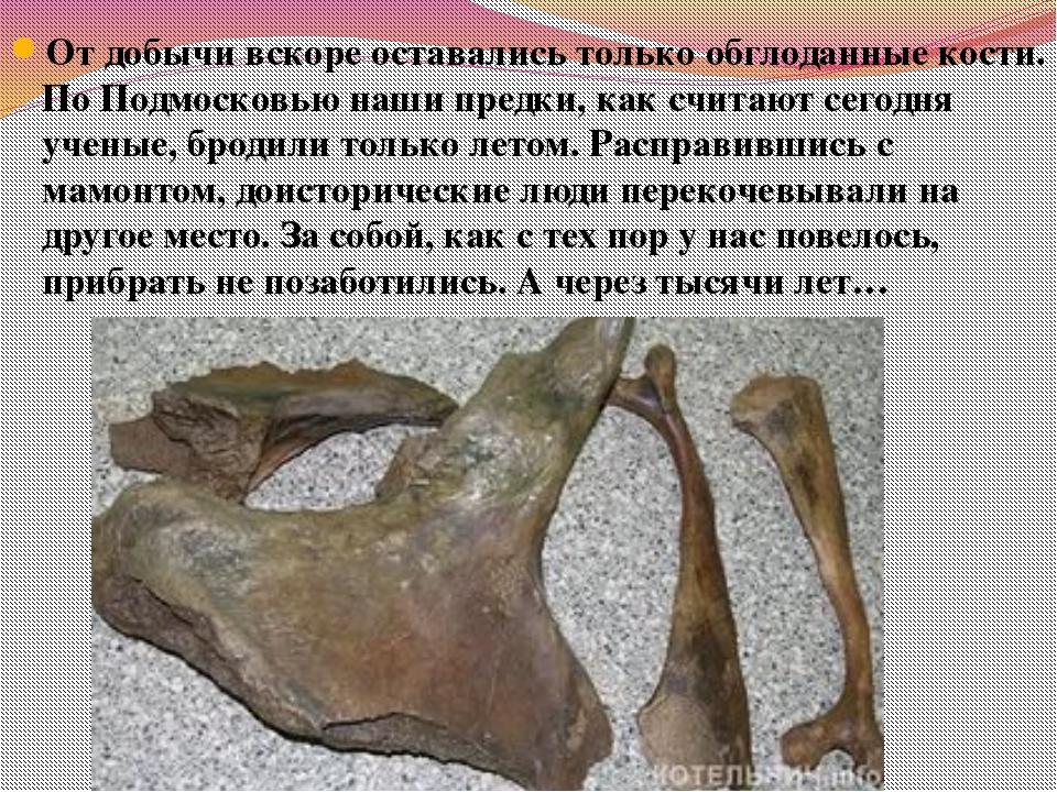 От добычи вскоре оставались только обглоданные кости. По Подмосковью наши пре...