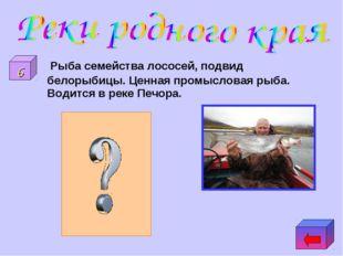 Рыба семейства лососей, подвид белорыбицы. Ценная промысловая рыба. Водится