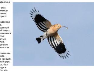 Интересные факты о птице удод Оказывается, этих пернатых приметили еще наши д