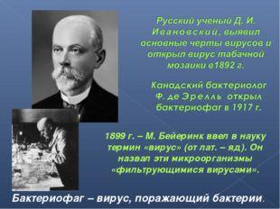 Бактериофаг – вирус, поражающий бактерии. 1899 г. – М. Бейеринк ввел в науку