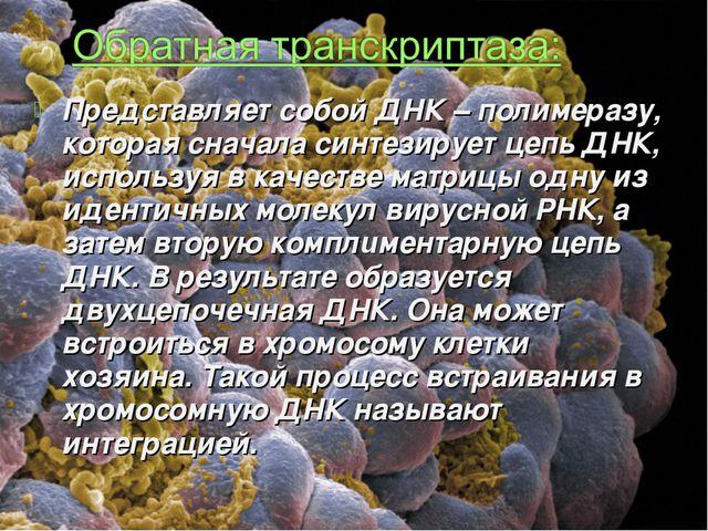 Представляет собой ДНК – полимеразу, которая сначала синтезирует цепь ДНК, ис...