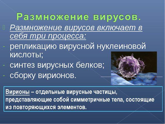 Размножение вирусов включает в себя три процесса: репликацию вирусной нуклеин...