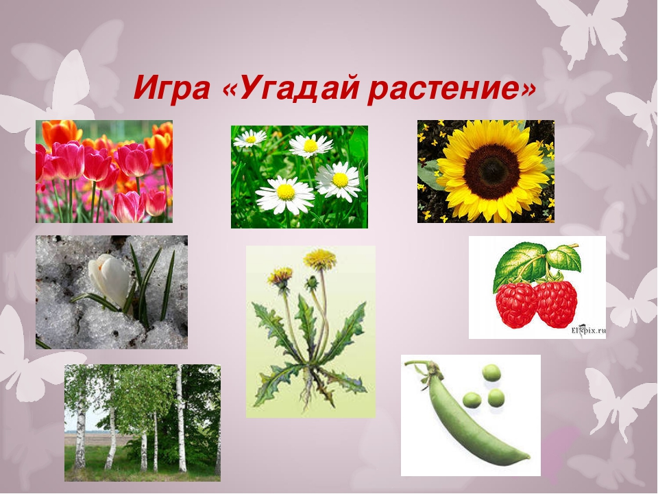 Игра «Угадай растение»