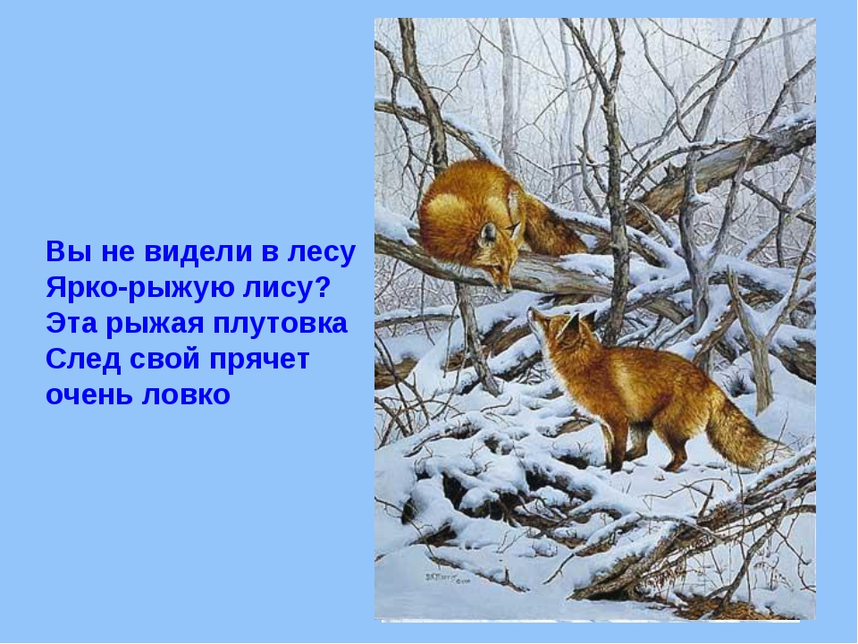 Вы не видели в лесу Ярко-рыжую лису? Эта рыжая плутовка След свой прячет очен...