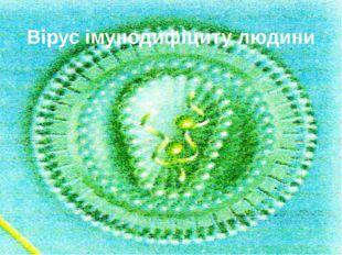 Вірус імунодифіциту людини