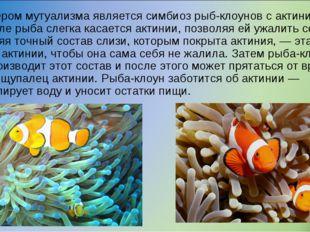 Примером мутуализма является симбиоз рыб-клоунов с актиниями. Вначале рыба сл
