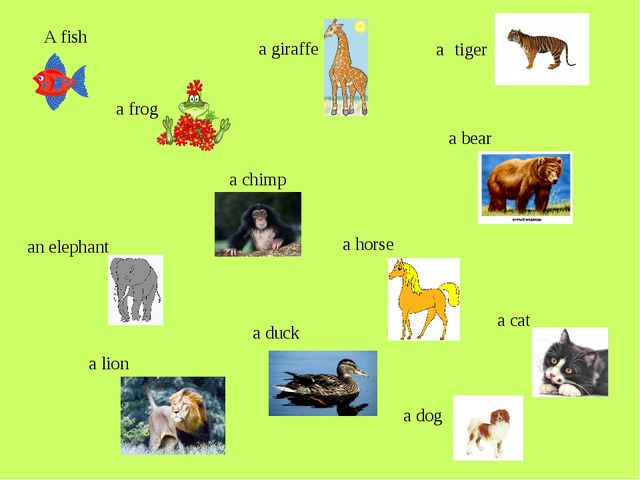 A fish a frog a chimp a horse a cat a dog a duck a lion an elephant a giraff...