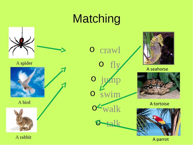 Matching crawl fly jump swim walk talk A spider A bird A rabbit