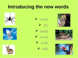 Introducing the new words crawl fly jump swim walk talk