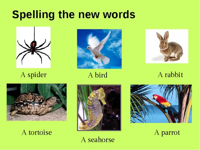 A spider A bird A rabbit A tortoise A parrot A seahorse Spelling the new words