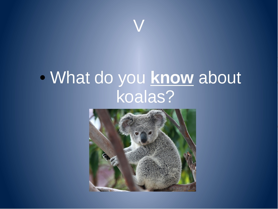 V What do you know about koalas?