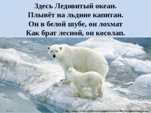 Здесь Ледовитый океан. Плывёт на льдине капитан. Он в белой шубе, он лохмат К