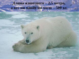 Длина животного – 2,5 метра, а вес ни много ни мало – 500 кг.
