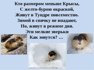 Кто размером меньше Крысы, С желто-бурою окраской, Живут в Тундре повсеместно