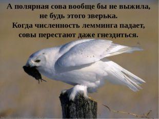 А полярная сова вообще бы не выжила, не будь этого зверька. Когда численность