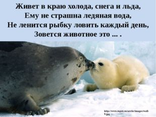Живет в краю холода, снега и льда, Ему не страшна ледяная вода, Не ленится ры
