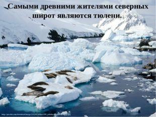 Самыми древними жителями северных широт являются тюлени.