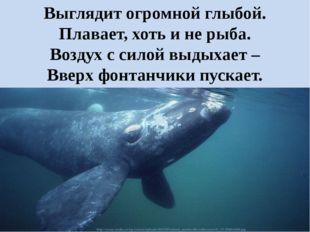 Выглядит огромной глыбой. Плавает, хоть и не рыба. Воздух с силой выдыхает –