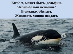 Кит? А, может быть, дельфин, Чёрно-белый исполин? В океанах обитает, Живность