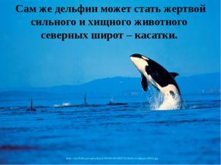Сам же дельфин может стать жертвой сильного и хищного животного северных широ