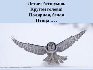 Летает бесшумно. Кругом голова! Полярная, белая Птица … .