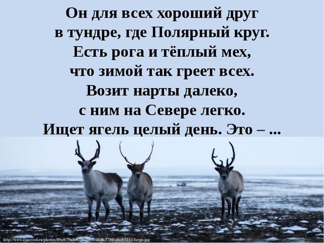 Он для всех хороший друг в тундре, где Полярный круг. Есть рога и тёплый мех,...