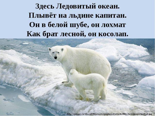 Здесь Ледовитый океан. Плывёт на льдине капитан. Он в белой шубе, он лохмат К...