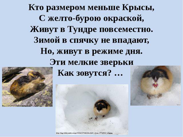 Кто размером меньше Крысы, С желто-бурою окраской, Живут в Тундре повсеместно...