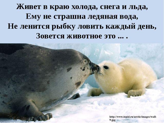 Живет в краю холода, снега и льда, Ему не страшна ледяная вода, Не ленится ры...
