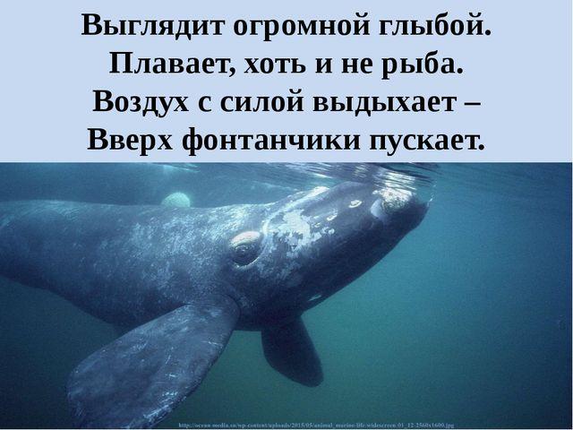 Выглядит огромной глыбой. Плавает, хоть и не рыба. Воздух с силой выдыхает –...