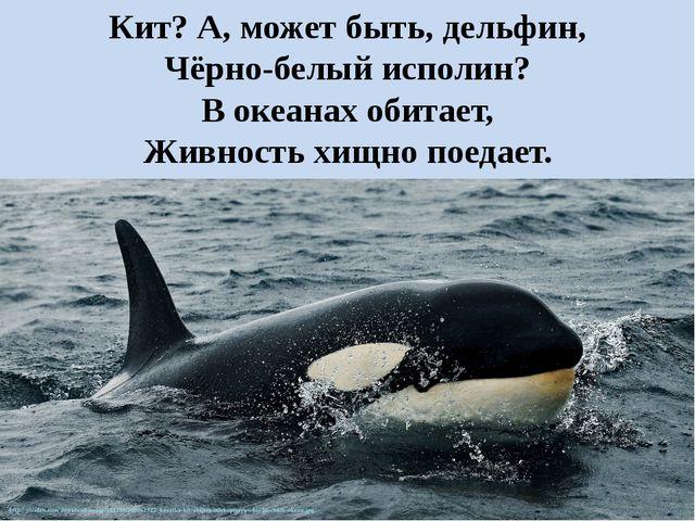Кит? А, может быть, дельфин, Чёрно-белый исполин? В океанах обитает, Живность...