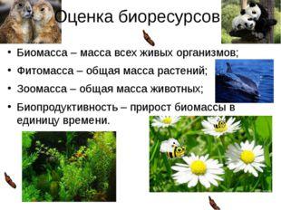 Оценка биоресурсов: Биомасса – масса всех живых организмов; Фитомасса – общая