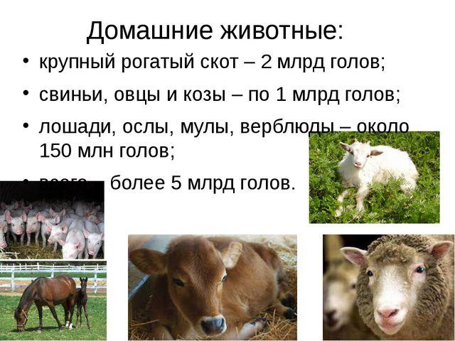 Домашние животные: крупный рогатый скот – 2 млрд голов; свиньи, овцы и козы –...