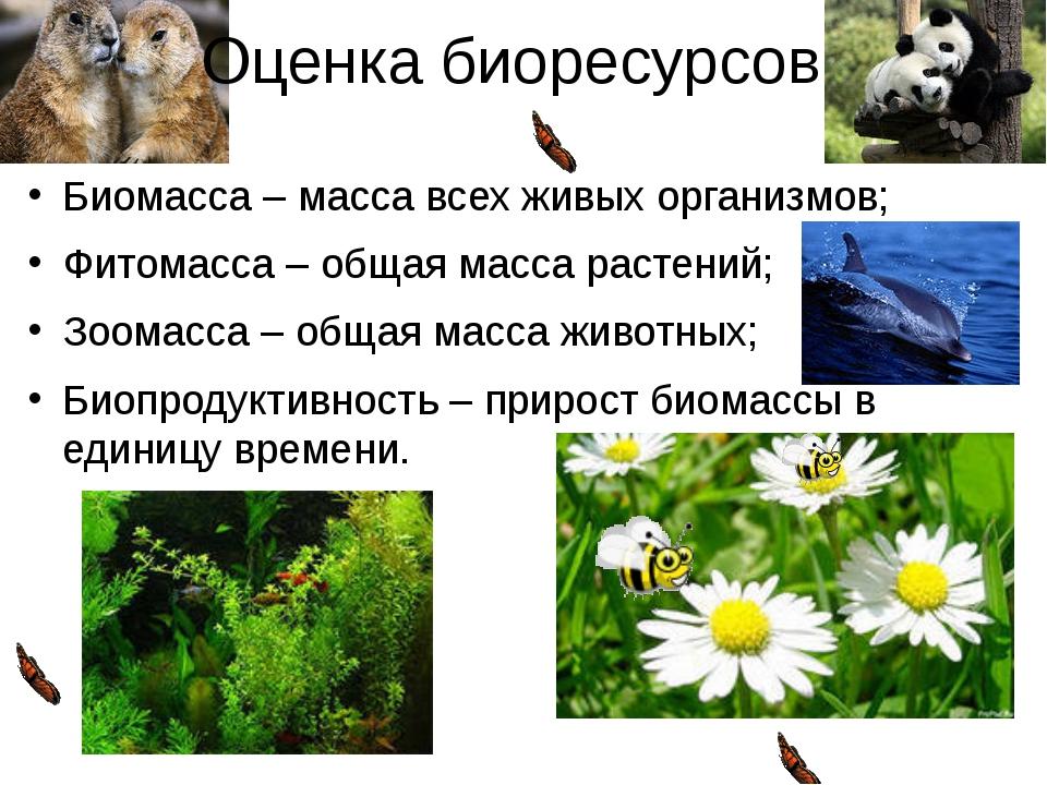 Оценка биоресурсов: Биомасса – масса всех живых организмов; Фитомасса – общая...