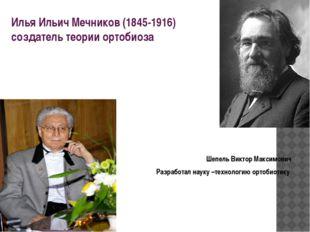 Илья Ильич Мечников(1845-1916) создатель теории ортобиоза Шепель Виктор Макс