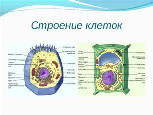Строение клеток