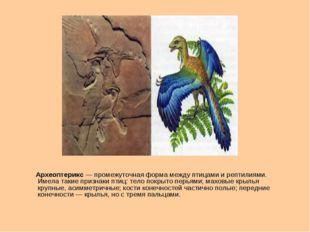 Археоптерикс— промежуточная форма между птицами и рептилиями. Имела такие п