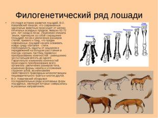 Филогенетический ряд лошади Исследуя историю развития лошадей, В.О. Ковалевск