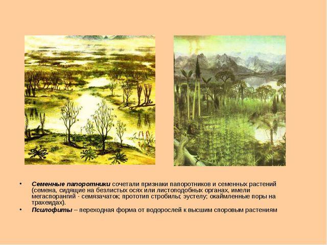 Семенные папоротники сочетали признаки папоротников и семенных растений (семе...