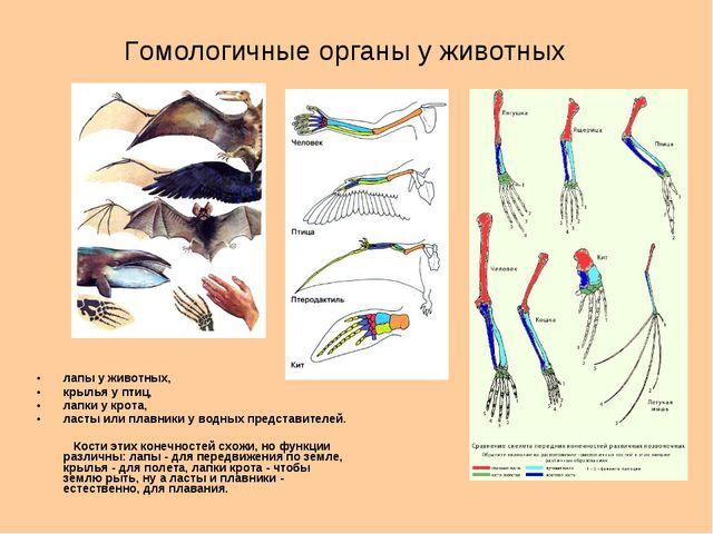 Гомологичные органы у животных лапы у животных, крылья у птиц, лапки у крота,...