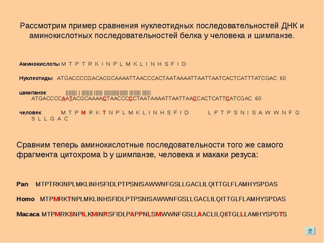 Рассмотрим пример сравнения нуклеотидных последовательностей ДНК и аминокисло...