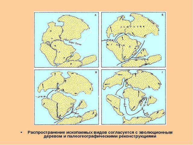 Распространение ископаемых видов согласуется с эволюционным деревом и палеоге...
