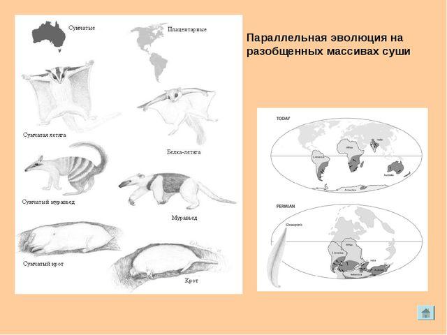 Параллельная эволюция на разобщенных массивах суши