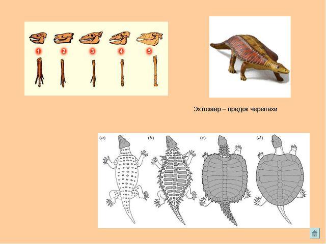Эхтозавр – предок черепахи