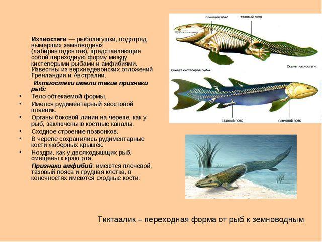 Ихтиостеги — рыболягушки, подотряд вымерших земноводных (лабиринтодонтов), п...