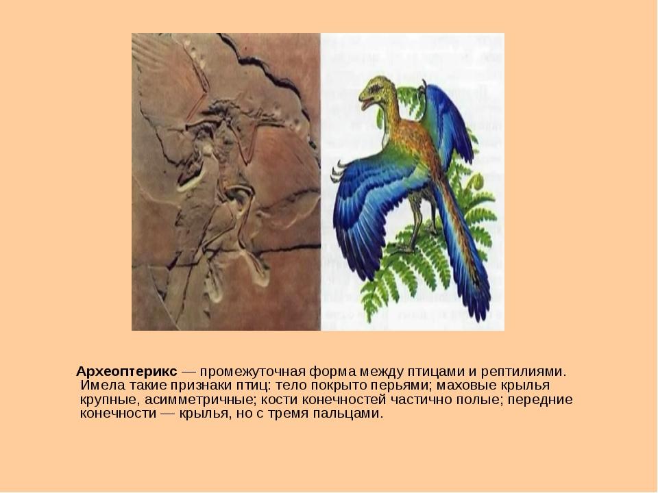 Археоптерикс— промежуточная форма между птицами и рептилиями. Имела такие п...